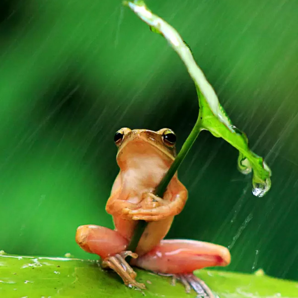 Personal umbrella insurance for Frog agency